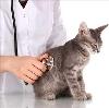 Ветеринарные клиники в Аскизе